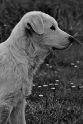 The sheep dog by greentortoise