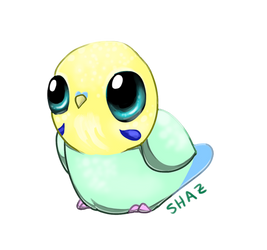 Parakeet Cutie by commander-booty-call