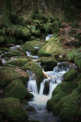 brook by FridayNightShot