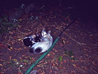 Kitties by deeabc