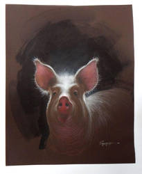 Pig by Boban-Savic-Geto