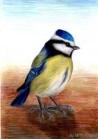 Blue Tit by MadInKaCC