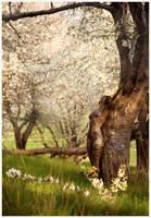 spring camouflage by LailaPregizer