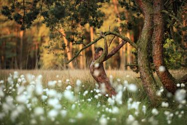 pines dance by LailaPregizer