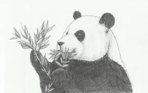 Panda by Natsu-GreyPencil