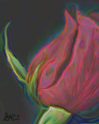 Red Rose by skorch0matik