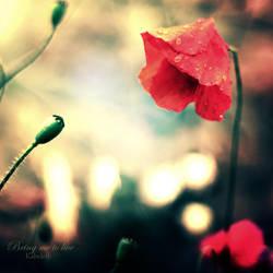 Poppy by Kabeleth