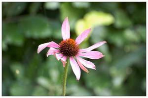 Purple Flower by MathiasLM