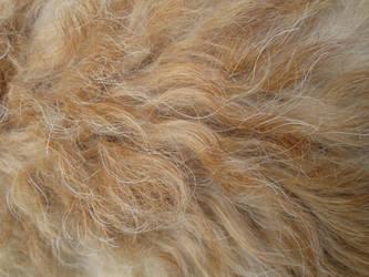 Fur Texture 2 by acheronnights