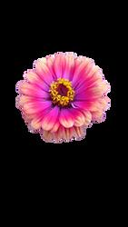 Flower2 by acheronnights