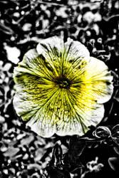 Flowerpic by Haslum