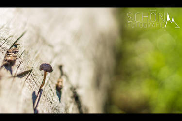 little fellow by Sayris