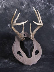 Antler Mount with Black Deerskin and Oak Detail by DiamondDustTaxidermy