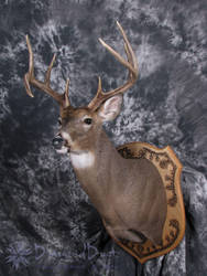 Bent Horn Buck front/side view by DiamondDustTaxidermy