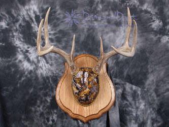 Antler Mount Golden Forest Camo by DiamondDustTaxidermy