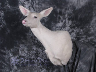 Albino Whitetail Doe by DiamondDustTaxidermy