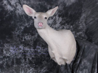 Albino Whitetail Doe Front View by DiamondDustTaxidermy