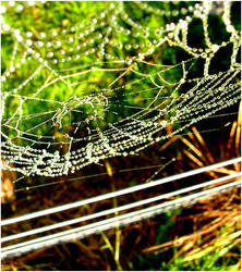 mornings web by crispylilapeth