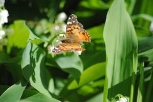 Butterfly by KelseyMariePhoto