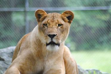 Lookin' For The Zookeeper by KelseyMariePhoto