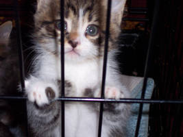 Caged Kitty by BrotherHades