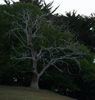 Dead N Bare Spookey Tree by Gracies-Stock