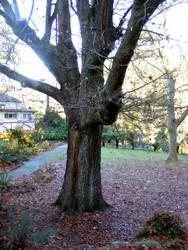 Tree 07 by Gracies-Stock