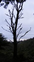 Tree 12 by Gracies-Stock