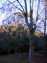 Tree 17 by Gracies-Stock