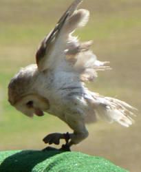 Bird Stock 2 by Gracies-Stock
