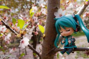 Cherry Blossom Spring Serenity by nutcase23