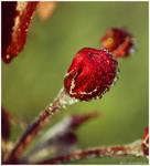 Red by dev1n