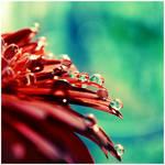 Glitter by dev1n