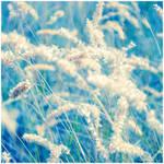 Breeze by dev1n
