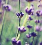 Flowers by dev1n