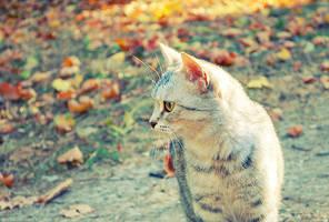 Meow by dev1n
