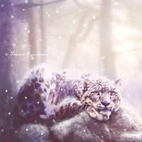 Winter by tamaraR