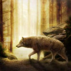 Wolf by tamaraR