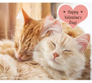 Valentine Pip and Bink by tamaraR