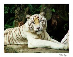 White Tiger by azuki13