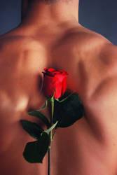 Last Rose Of Summer by vishstudio