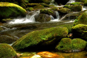 mossy waters by eliments