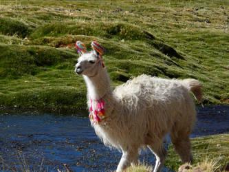 Llama. by xSoma