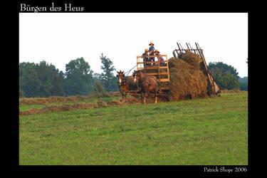 Amish hay bailing by pshope