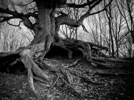 Bawdeswell Heath 3 by sparxphoto