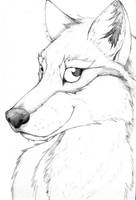 Wolf by sebastiangreyfox