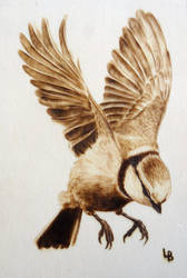 Pyrography - Blue tit / Pimpelmees by Holly-Toadstool