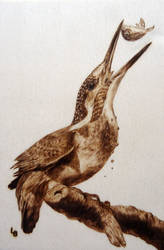 Pyrography - Kingfisher by Holly-Toadstool