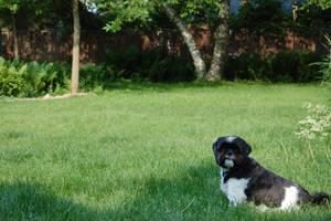 Backyard Dog by cyspence