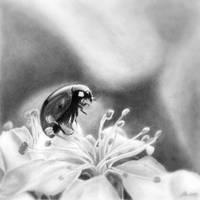 Ladybug by Metlina-chan